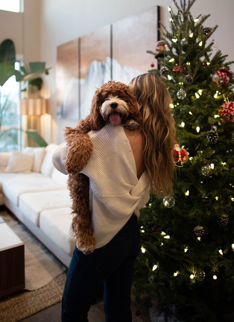 5 DIY Christmas Gift Ideas For Dogs. Gifts For Dogs. Gifts For Pets. Christmas Presents For Dogs. Gift Ideas For Dogs. Gifts For Fur Babies. DIY Projects For Dogs. Crafts For Dogs. Xmas Gift Ideas For Dogs. Elephant on the Road.